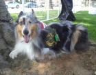 Veteran's Service Dog in Critical Condition, Needs Our Help
